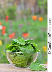 fresh green spinach