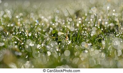 Fresh green spring grass with dew drops