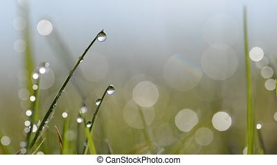 Fresh green spring grass with dew drops closeup.