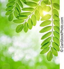 Fresh green spring leaves