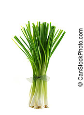 Fresh green Spring Onion