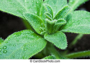 Fresh green spring seedings