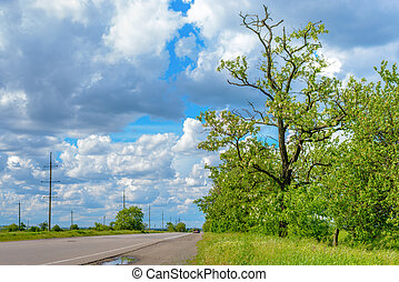 Fresh green spring trees at the side of a road