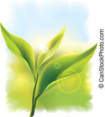 Fresh green tea leaves in the rays of sun. Vector illustration.