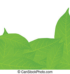 Fresh, green tea leaves on a white background