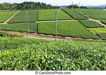 Fresh green tea