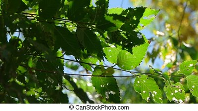 Fresh green tree leaves backlit in front of sky