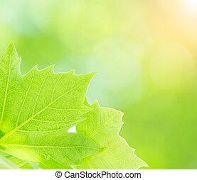 Fresh green tree leaves border on blurry background, closeup...