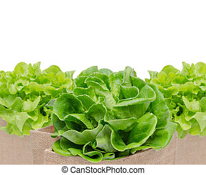 fresh green vegetables isolated