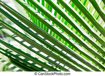 Fresh greenery palm leaves with geometric forms