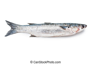fresh grey mullet on a white background