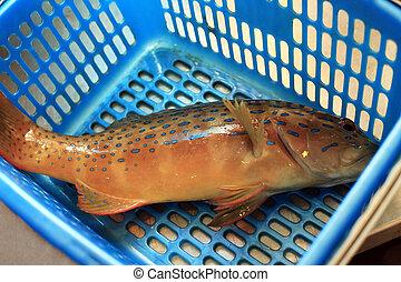 Fresh grouper