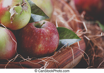 Fresh harvest of autumn sweet apples in a large bowl with hay on a vintage wooden background, selective focus and shallow depth of field and toned image