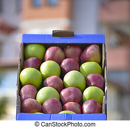 fresh harvested ripe apples for sale