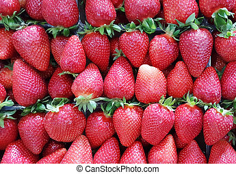 fresh harvested strawberries for sale