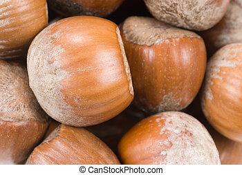 hazelnuts - fresh hazelnuts background