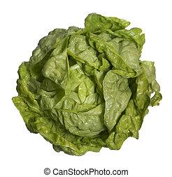 fresh head of lettuce