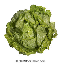 fresh head of lettuce