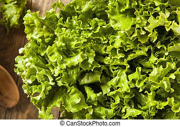 Fresh Healthy Organic Green Leaf Lettuce