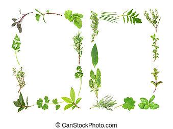 Fresh Herb Leaf Abstract - Abstract fresh herb leaf...