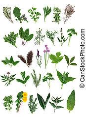 Fresh Herb Selection