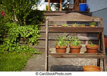 Fresh herbage in pots grown in the garden