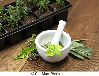 Fresh herbs and their young plants