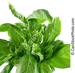 Fresh Herbs Basil 2
