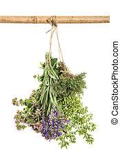 Fresh herbs Food ingredients thyme oregano marjoram