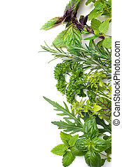 Fresh herbs - Fresh green herbs isolated over white...