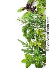 Fresh herbs - Fresh green herbs isolated over white...