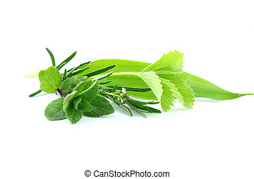 Fresh herbs from garden on white background
