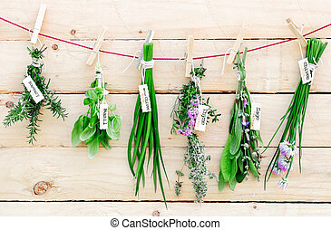 Fresh herbs hanging from pegs - Bunches of fresh herbs with ...