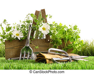 Fresh herbs in wooden box on grass