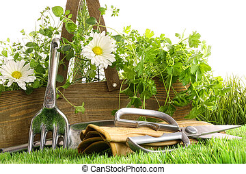 Fresh herbs in wooden box with tools
