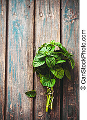 Fresh herbs mint