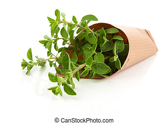 Fresh herbs oregano isolated on white background