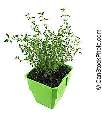 Fresh Herbs Thyme 1