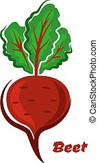 Fresh isolated cartoon beet vegetable