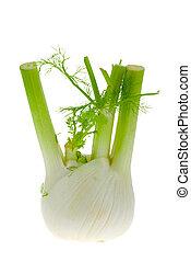 fresh isolated fennel