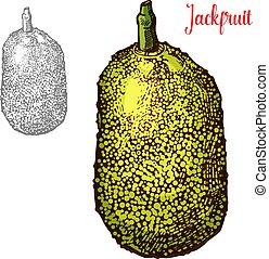 Fresh jackfruit vector design - Jackfruit exotic fresh fruit...