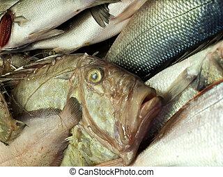 John Dory fish on Croatian fish market