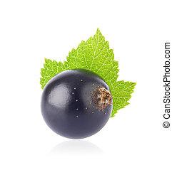 Fresh juicy black currant with green leaf