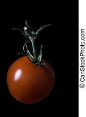 Fresh juicy cherry tomato with green twig isolated on black.