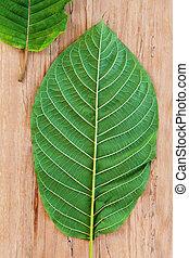 Fresh kratom leaves. Flat lay. - Fresh kratom leaves from...
