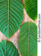 Fresh kratom leaves. - Fresh kratom leaves on wooden table...