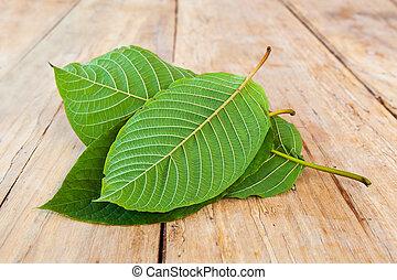 Fresh kratom leaves. - Fresh kratom leaves on wooden table.