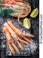 Fresh langoustines on crushed ice