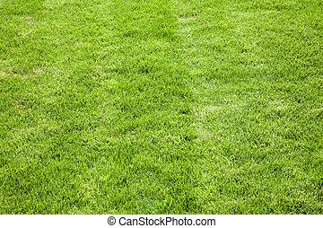 fresh lawn grass background