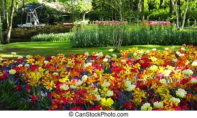 fresh lawn with flowers - fresh spring lawn with blooming...